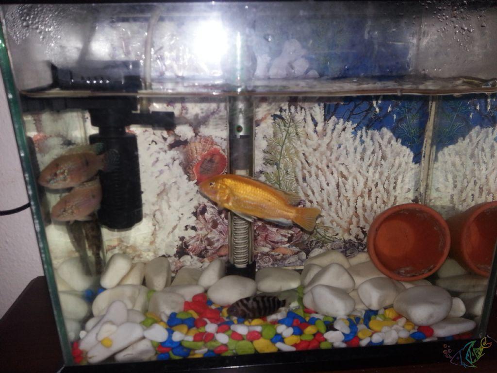 Hangi Balığı Beslemeliyim
