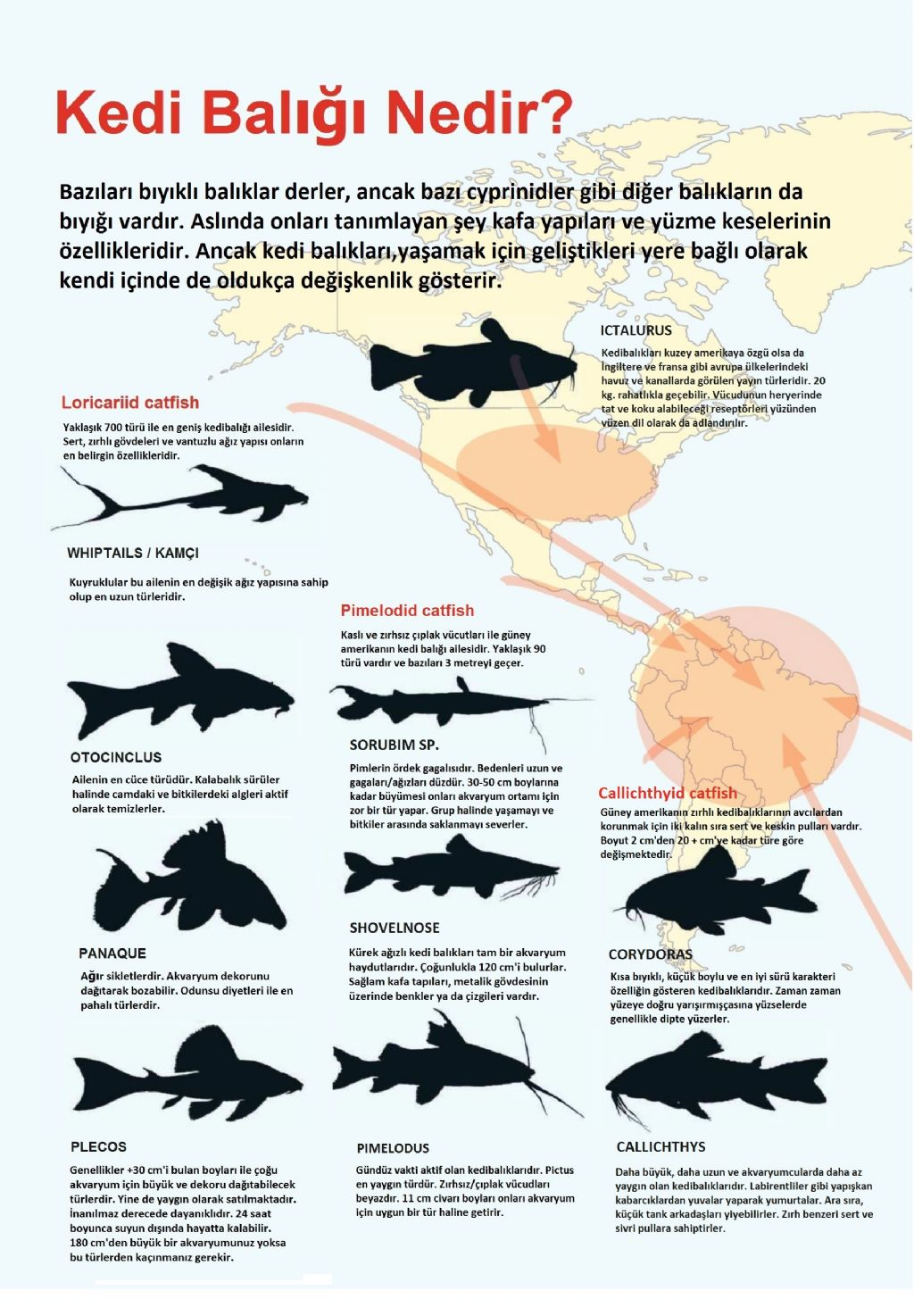 Iyi labirent balık nelerdir