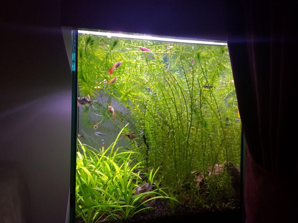 Sömürge yosunları ... Sömürge yosunlarının örnekleri, özellikleri ve önemi
